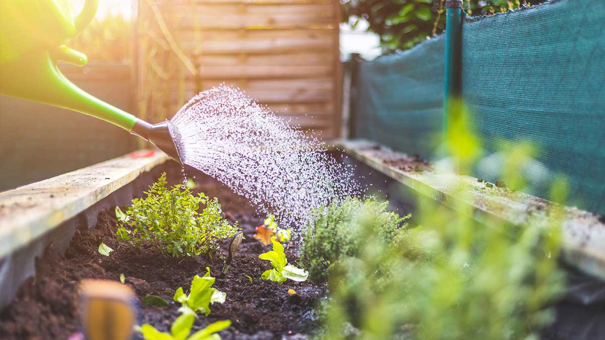 It's Time to Plan and Prepare Your Garden!